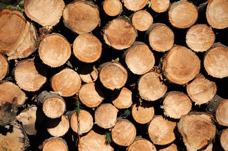 stacking chopped tree log in pile