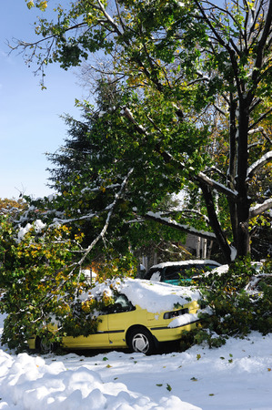 car damaged by fallen tree branches in snow storm Banco de Imagens