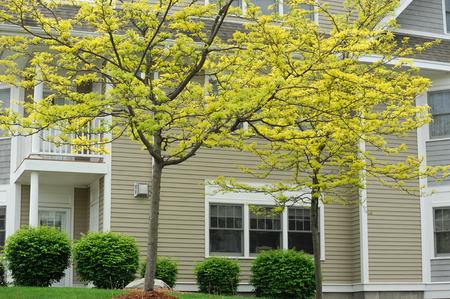 edificio de apartamentos con árboles de primavera paisaje
