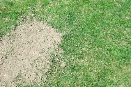 lawn in bad condition and need maintaining 版權商用圖片