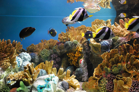 colorful coral reef underwater and fish