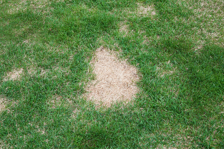 lawn in bad condition and need maintain care 版權商用圖片