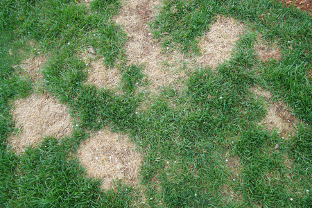 lawn in bad condition and need maintain care 版權商用圖片 - 91085519