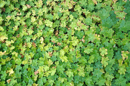 High angle view of green and yellow leaves background