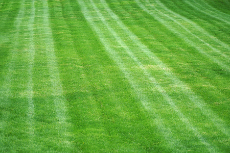 sport grass field after mowing