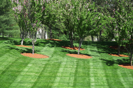 trees on green lawn, outdoor landscaping