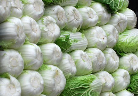 Stacking fresh Chinese cabbage in pile