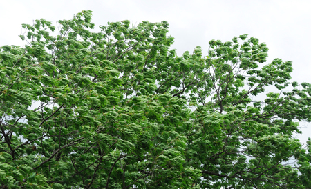 Close up on green tree branches and leaves in the wind Imagens