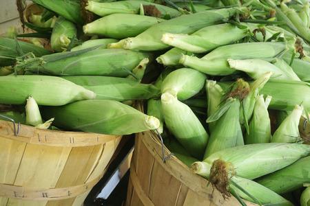 corn harvest in the basket in the farm