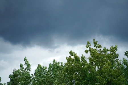 tree and dark storm cloud before thunderstorm