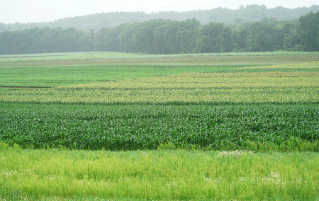 farm field with plant growing in summer Stock Photo