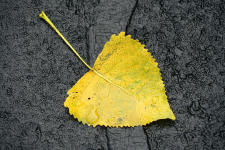 single fallen yellow leaf on asphalt road surface