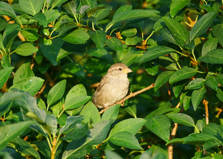 bird standing on the branches in green leaves Stock Photo