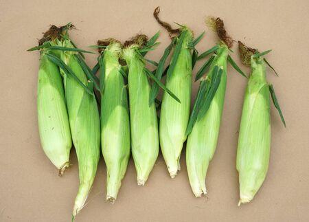 close up on corn cob during harvest season