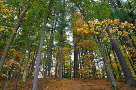 low angle view of trees in autumn forest 版權商用圖片