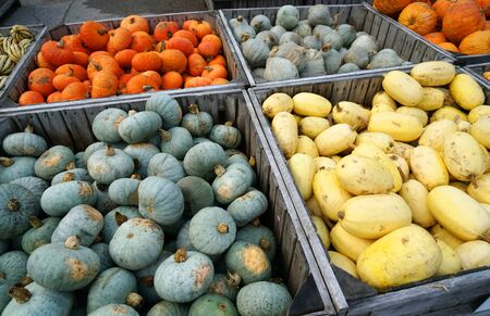 colorful pumpkins in container at farm in autumn harvest season Stok Fotoğraf - 128430023