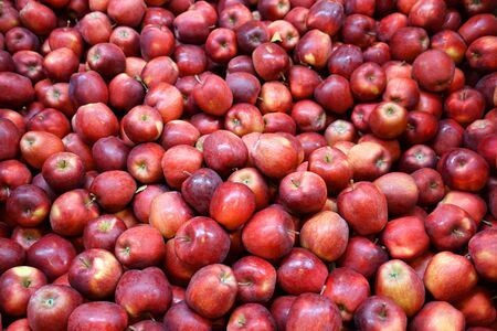 Fresh picked red delicious apples background in the harvest season Stok Fotoğraf - 128430051