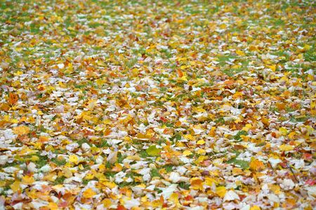 fallen leaves on the meadow in autumn season
