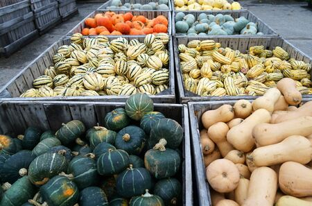 colorful pumpkins in container at farm in autumn harvest season Stok Fotoğraf