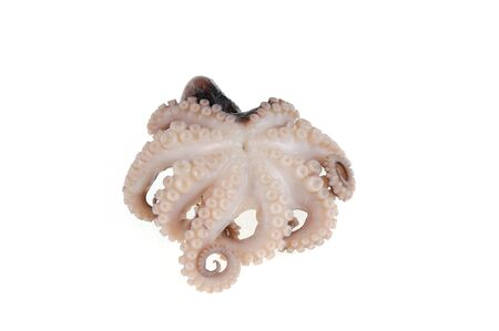 cooked octopus isolated on the white background
