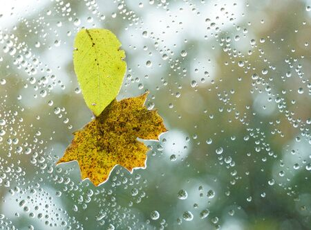 autumn leaves with raindrop on glass window Stok Fotoğraf