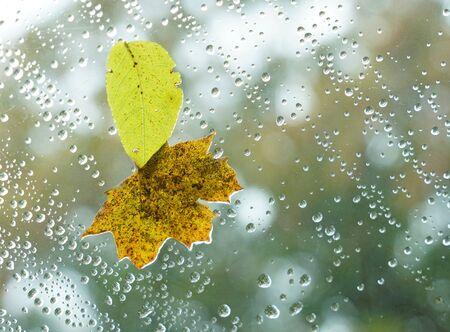 autumn leaves with raindrop on glass window Stok Fotoğraf - 128429947