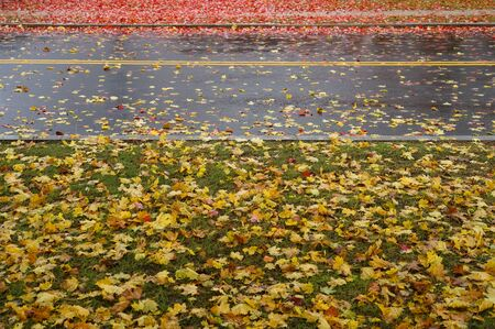 fallen yellow and red leaves on the road in autumn
