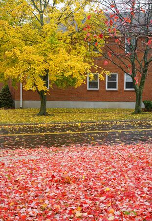 autumn yellow trees with yellow and red fallen leaves in front of the building