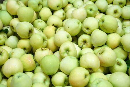 Fresh picked green apples background in the harvest season Stock fotó