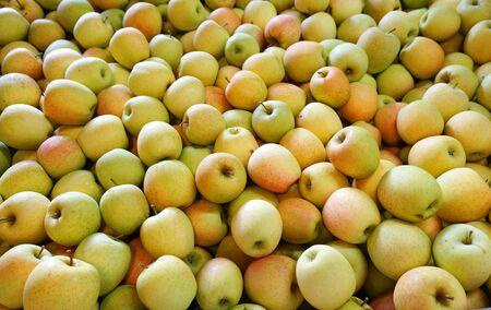 Fresh picked golden delicious apples background in the harvest season Stock fotó