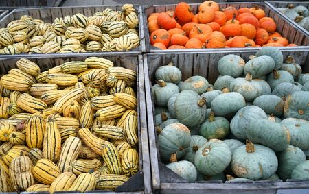 colorful pumpkins in container at farm in autumn harvest season 写真素材