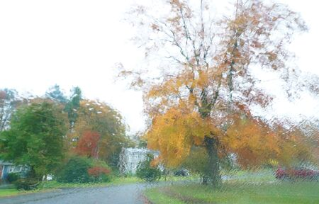 autumn golden tree in residential area through window with rain 写真素材