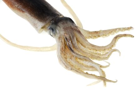 fresh squid isolated on the white background Reklamní fotografie