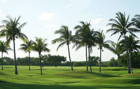 coconut trees in tropical golf course