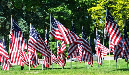 USA flags on the meadow Imagens
