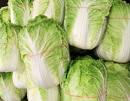 Stacking Chinese cabbage in pile in harvest season