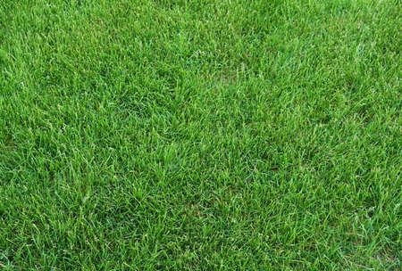 real green grass background Stok Fotoğraf