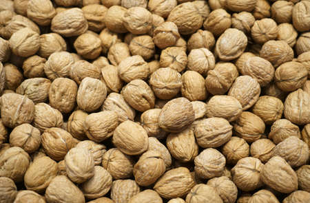 walnut in pile during harvest season as food background