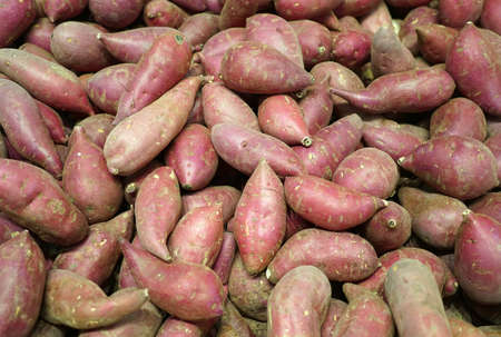 fresh sweet potato in pile as food background