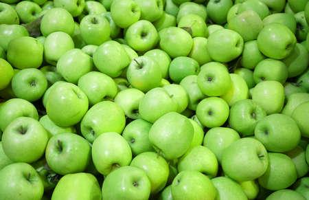 Fresh picked green apples background in the harvest season Stok Fotoğraf