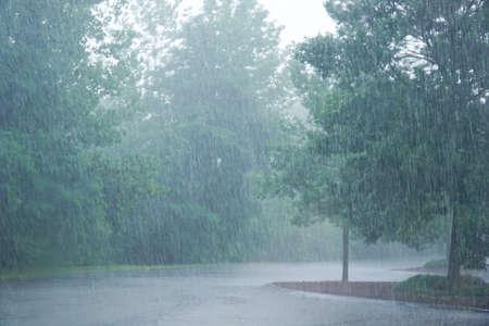landscape of heavy rain and trees
