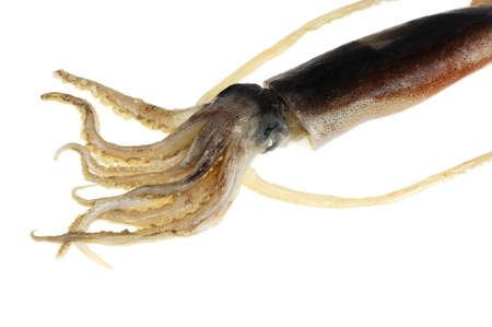 fresh squid isolated on white background