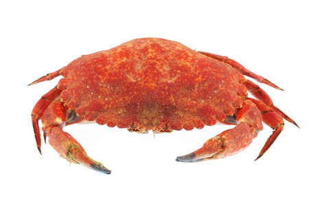 single steamed crab isolated on white background Stock Photo