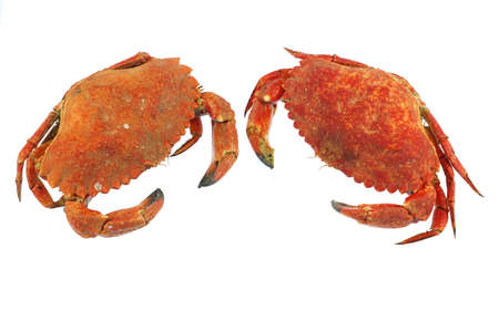 single steamed crab isolated on white background 免版税图像 - 159296700