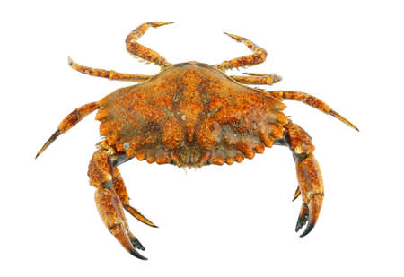 live crab isolated on white background 免版税图像