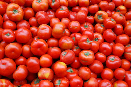 close up on fresh tomato pile in harvest season