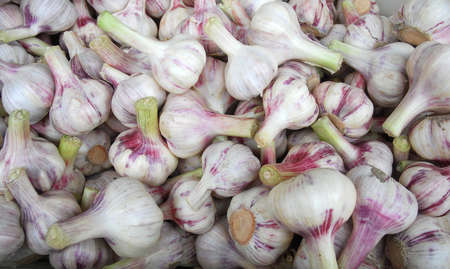 fresh raw garlic as food background 免版税图像 - 159418705