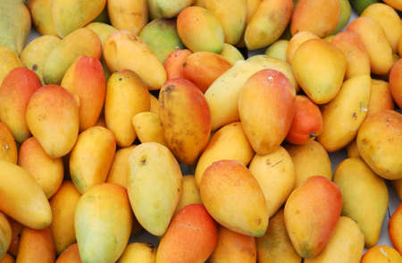 fresh mango in pile in the harvest season 免版税图像 - 159431837