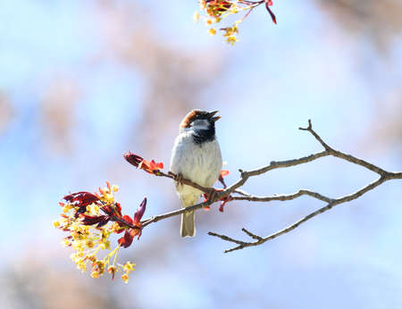 song bird standing on tree branch in spring