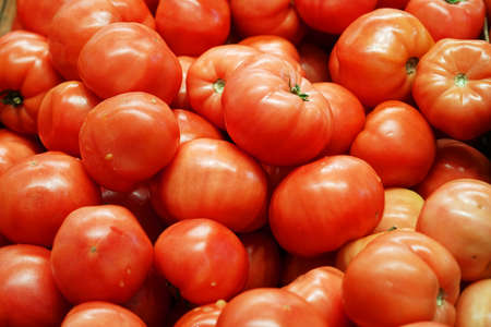 fresh farm picked tomatoes as food background